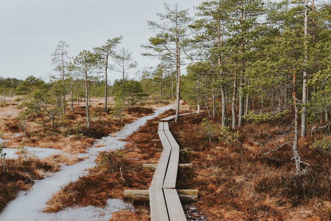 Torronsuon kansallispuisto