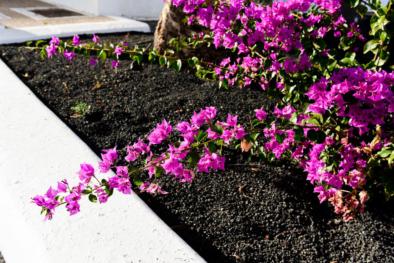 Flowers Yaiza Lanzarote